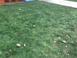Turf Paint turns Dead Lawns Green